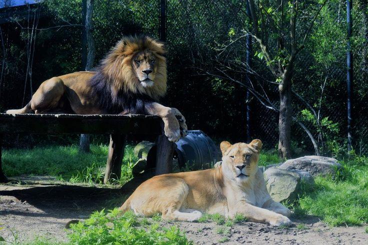 Philadelphia Zoo #Coupons & #Discounts #2017 #Philadelphia #Pennsylvania #philadelphiazoo #theknowandgo #traveldeal #vacation  http://www.theknowandgo.com/philadelphiazoo