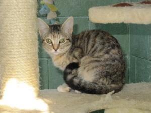 Katze, EKH (Mischling, weiblich, 2 Jahre) Spanien - Porugetta unser Sorgenkind!