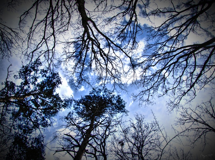 Trees above us