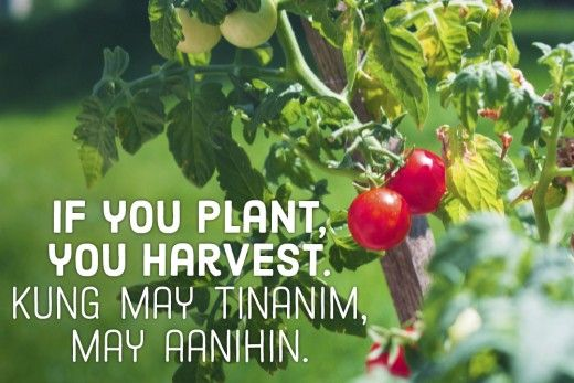 If you plant, you harvest. —Filipino proverb