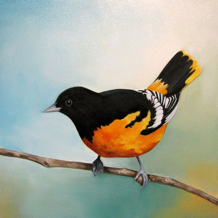 Baltimore Oriole  Acrylic on Panel, 8x8 inches www.amyshawley.com