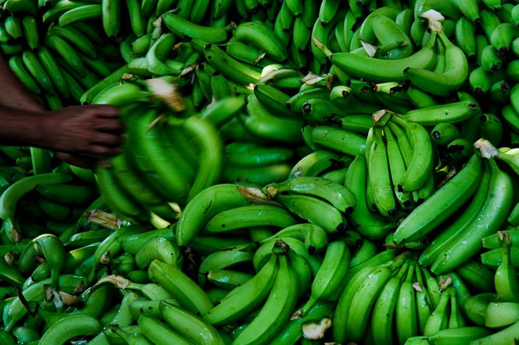 Máte radi banány? Z chuťového hľadiska asi áno, však? Ja som ich v minulosti konzumoval vo veľkom množstve, ale časom ma to nejako omrzelo, keďže sa nejedná o pre nás sezónnu potravinu a ich pôvod a pestovanie je pochybné. A zdá sa, že som urobil dobre, pretože súčasné pestovanie banánov si vyžaduje veľké množstvo pesticídov a ich nutričná hodnota pravdepodobne nie je príliš vysoká, keďže sa zbierajú zelené.