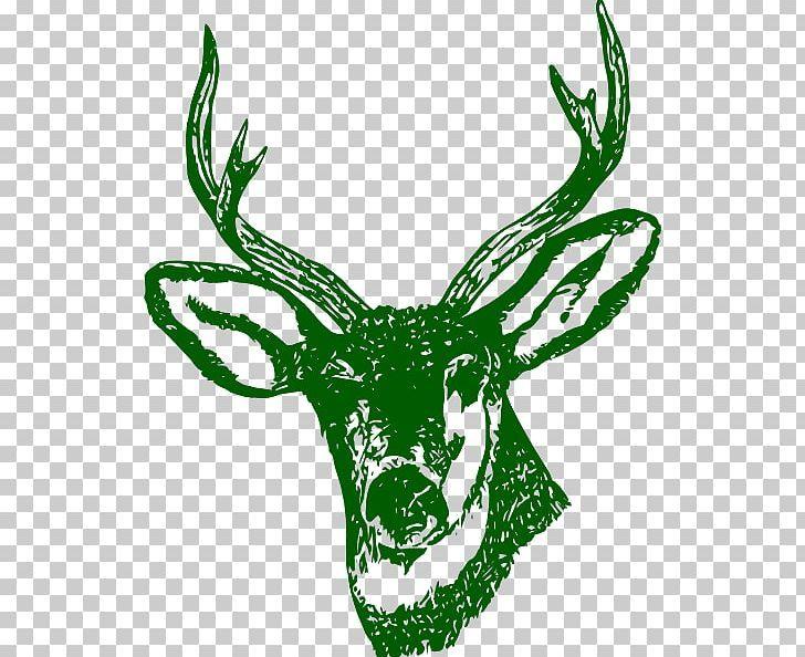 White Tailed Deer Red Deer Reindeer Png Whitetail Deer Deer Red Deer