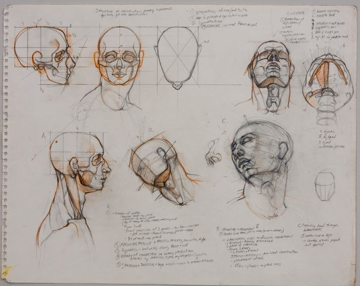 Character Design Tutorial Free : Best character anatomy neck images on pinterest