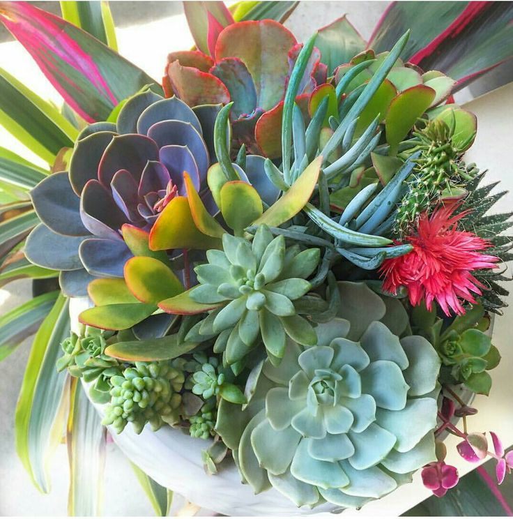 Colorful succulent grouping