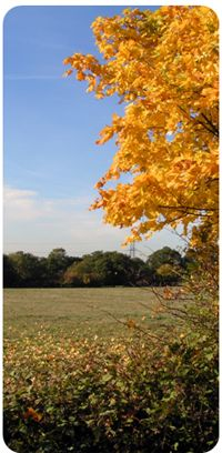 Horton Country Park, Epsom  also bbq areas for rent - http://www.epsom-ewell.gov.uk/EEBC/Leisure+and+Culture/Parks+and+countryside/Barbecues+for+Hire.htm