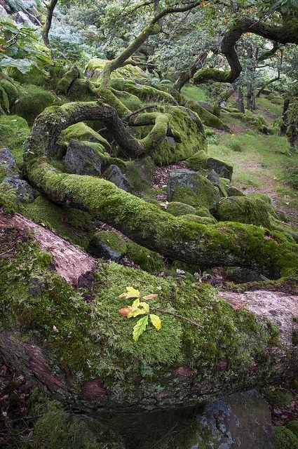 Burbage brook in the Peak District