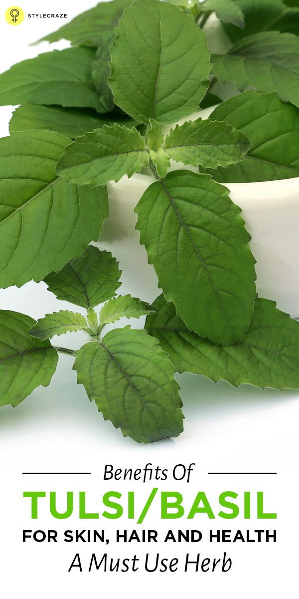 "Holy Basil, the ""queen of herbs"" is the most sacred of all the herbs found in India! Given here are the amazing benefits of Tulsi that you should be aware of"