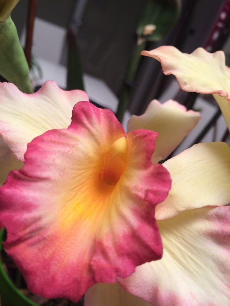 orchidea in pasta di zucchero