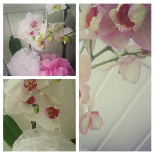 #portalpecaapeca #flowers #home #homeDecor Follow us:  http://www.pecaapeca.com http://www.facebook.com/portalpecaapeca