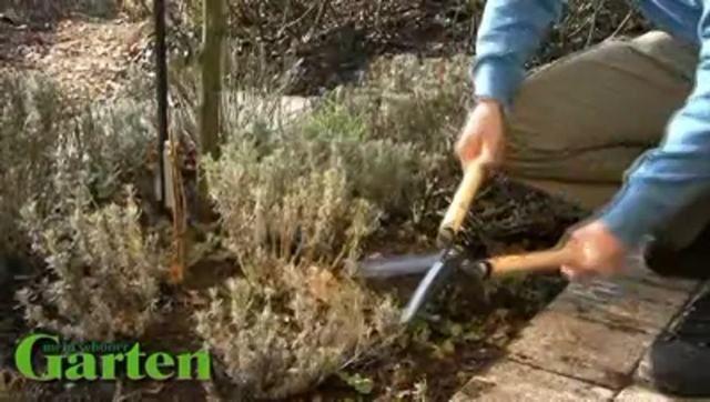 In diesem Praxisvideo zeigt Ihnen MEIN SCHÖNER GARTEN-Redakteur Dieke van Dieken, wie man Sommerflieder, Lavendel und Bauern-Hortensien zurückschneidet.
