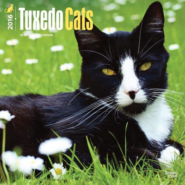tuxedo cats calendar 2016