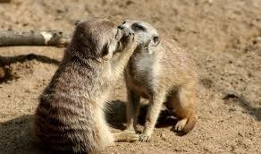 Kiss me baby..
