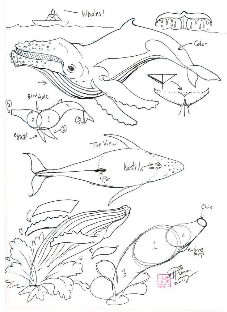 how to draw a sperm whale