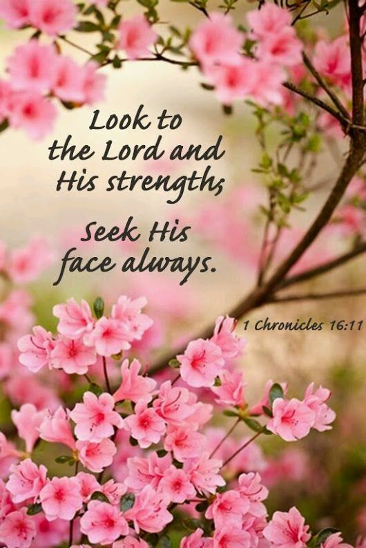 1 Chronicles 16:11 (NIV) - Look to the LORD and His strength; seek His face always.