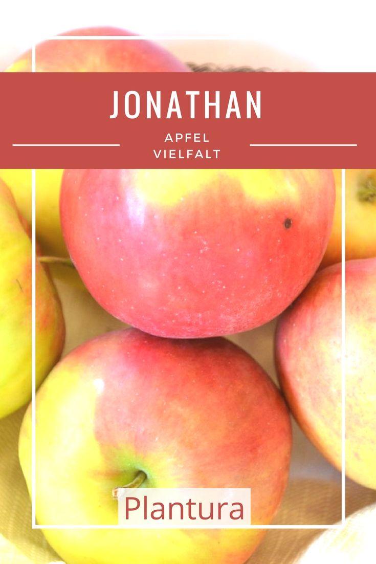 Aufgrund seines feinen, süßsäuerlichen Aroma ist der Apfel Jonathan ein beliebter Tafel- und Weihnachtsapfel.