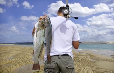 Bait to Use for Surf Fishing - Recommended by Fishing London, guide service - http://www.fishinglondon.co.uk/
