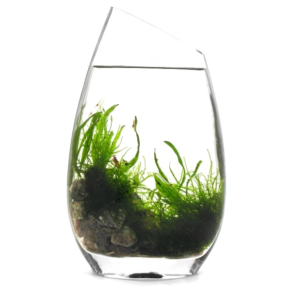 Fill your vase with LIFE! This miniature ecosystem is designed to be educational and beautiful. Unlike an aquarium that requires constant upkeep, this ecosystem sustains itself through the natural balance of life. By BLUEiQ  #sneakpeeq