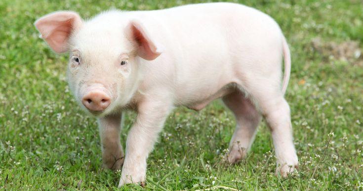 El veterinario al que entrevistó Évole desmonta los argumentos de El Pozo