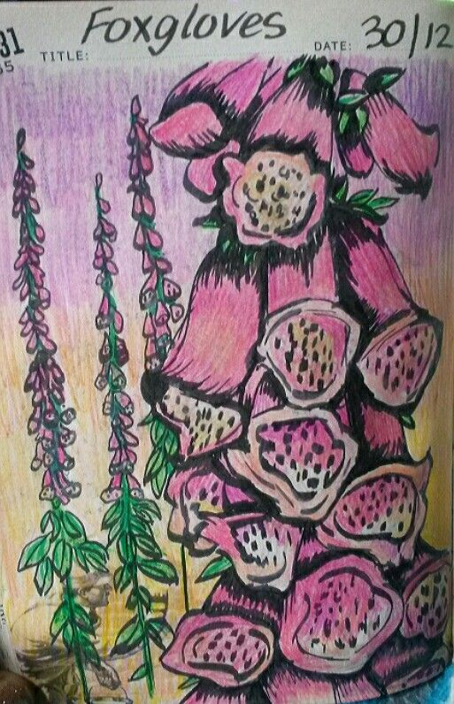 Foxgloves drawing