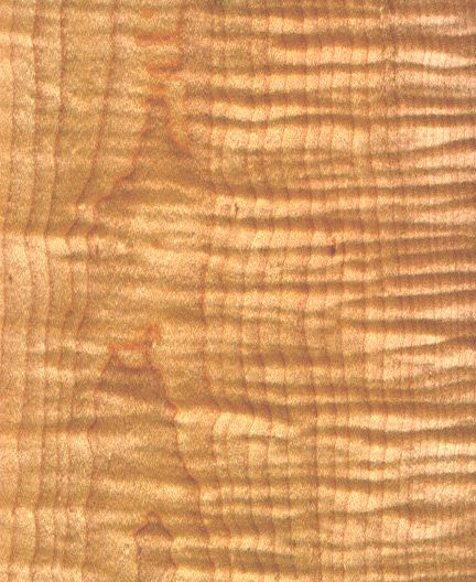 Curly Maple Wood ~ Curly maple i want to use and make kitchen cabinets