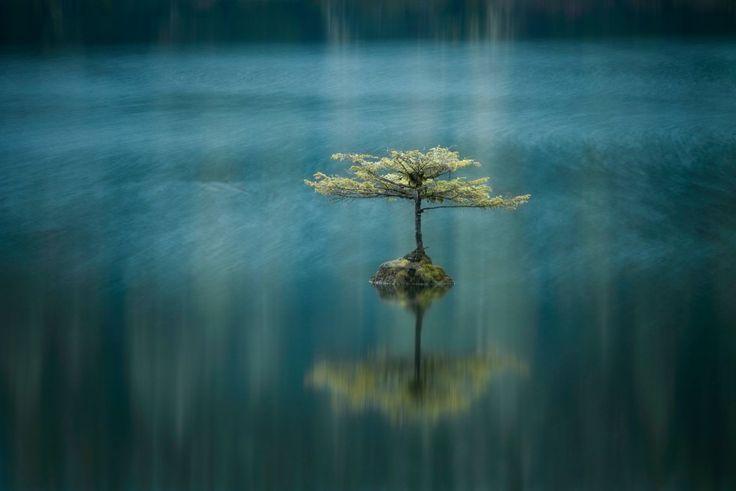 Fotografia da série ganhadora do segundo prêmio no International Landscape Photographer of the year. Fairy Lake, Columbia Britânica, Canadá.