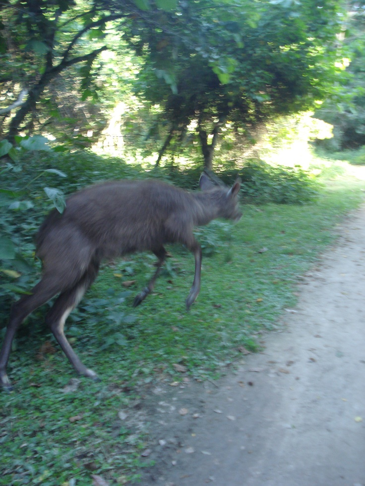 Rubondo Island National Park rare animal