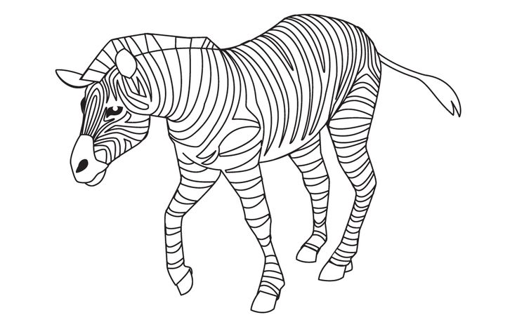 1000 Images About Zebra On Pinterest