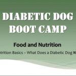 Diabetic Dog Nutrition | Diabetic Dog Bakery Blog