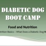 Diabetic Dog Nutrition | Diabetic Dog Bakery Blog