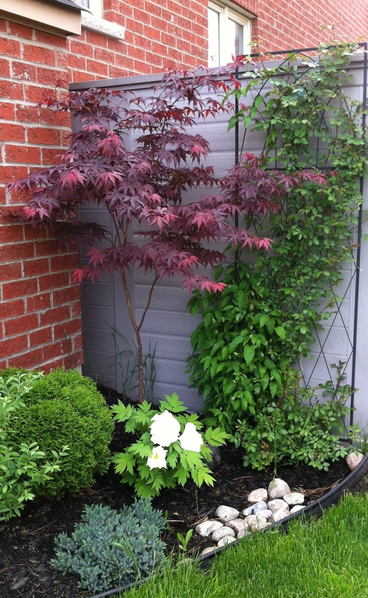 Plants to cover the shed.