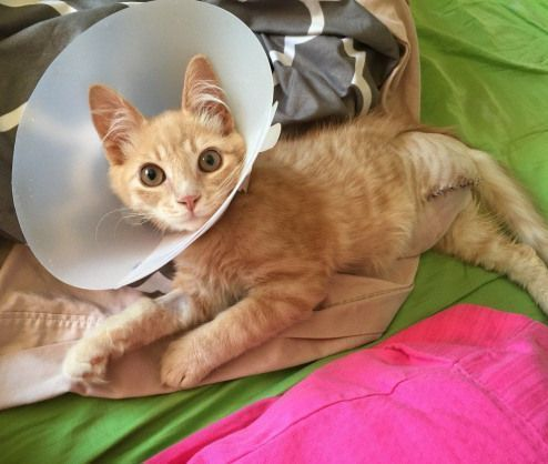 A Tiny Ginger Kitten With A Missing Foot Couldn T Stop Thanking His Rescuers After He Was Saved From Living As A Str Ginger Kitten Kitten Rescue Little Kittens