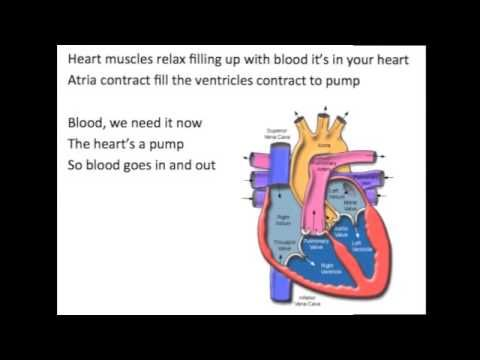 290 best med school 3 images on pinterest learning school and the heart song youtube fandeluxe Choice Image