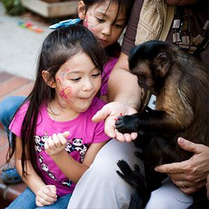 Mojo the Capuchin Monkey makes new friends every day during the Los Angeles County Fair