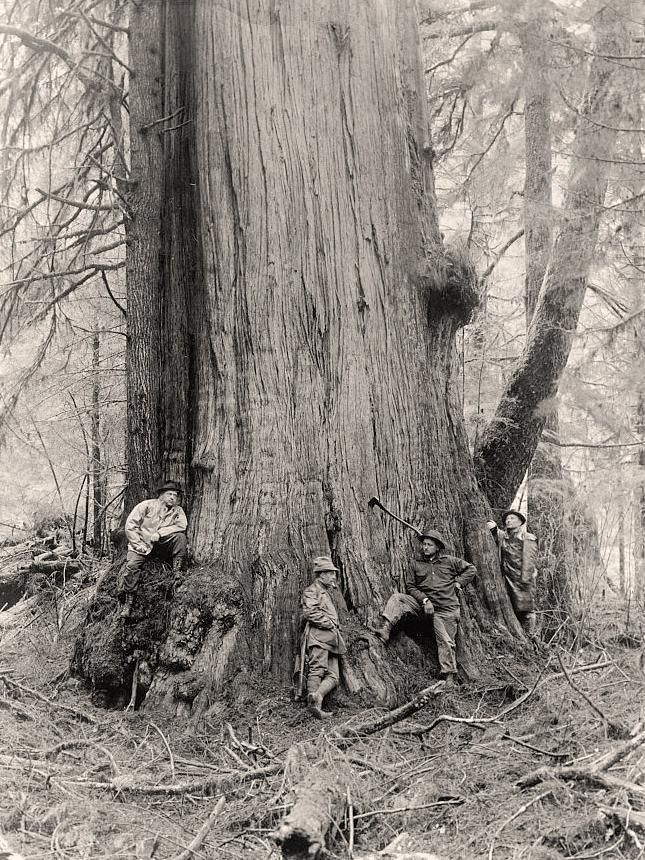 Lumberjacks You are viewing an educational photo of Lumberjacks. It was made between 1905 and 1945.