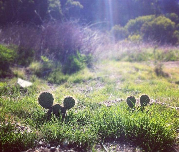 Volkert Hageman van Dril, verborgen Mickey's | Upload jouw beeldcollectie op beeldjagers.org