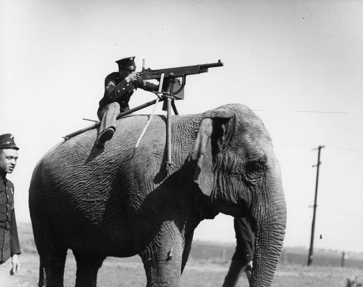 A soldier equips an elephant-mounted machine gun during WWI, c.1914-1918 [800x634] - Imgur