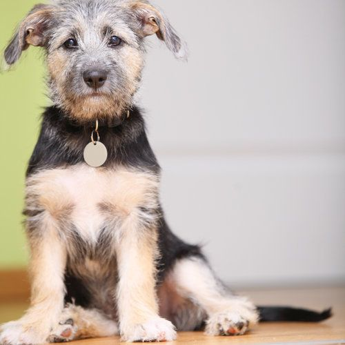 I got Mutt - What Type of Dog Should You Get? - Take the quiz!