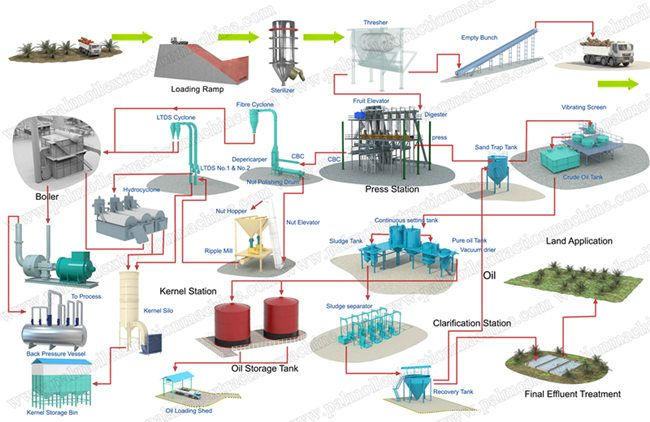 This is palm oil processing    plant    process flow chartThe