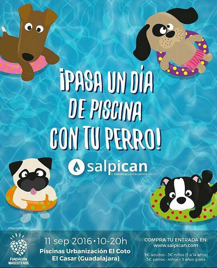 Las 25 mejores ideas sobre piscinas para perros en pinterest piscina del perrito piscina - Piscinas para perros ...