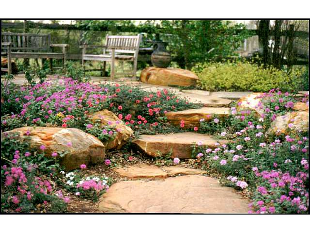 beautiful texas plants drought