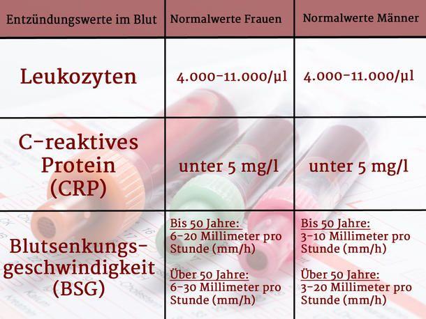 Bsg Blutwert
