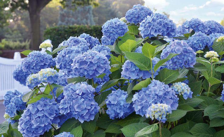 39 best Garten images on Pinterest   Blumen, Garten pflanzen und ...