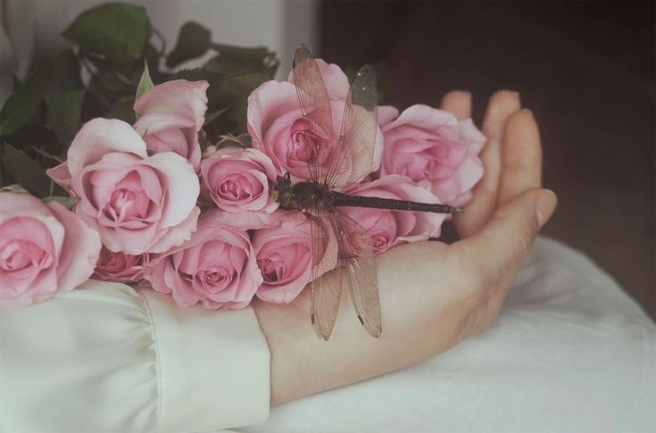 pink roses in hand, Elisa Scascitelli