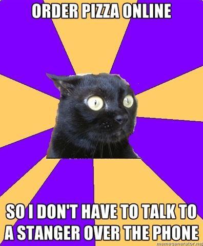 Stranger Danger Anxiety Cat
