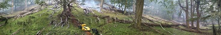 """Incendio en la Reserva Provincial """"Corazón de la Isla"""" - Tierra Del Fuego."""