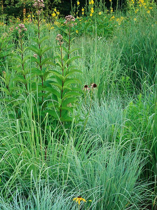 242 best ornamental grasses images on pinterest for Ornamental prairie grass