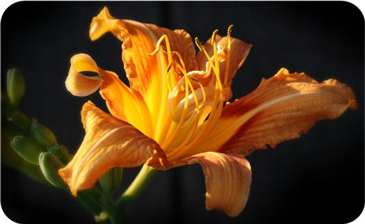 a study of the symbolism of flower in greek masculinity The mythology study guide contains a biography of edith hamilton, literature essays, quiz questions, major themes, characters, and a full summary and analysis of the major greek myths and.