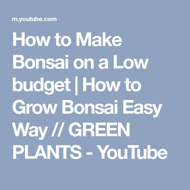 How to Make Bonsai on a Low budget | How to Grow Bonsai Easy Way // GREEN PLANTS - YouTube