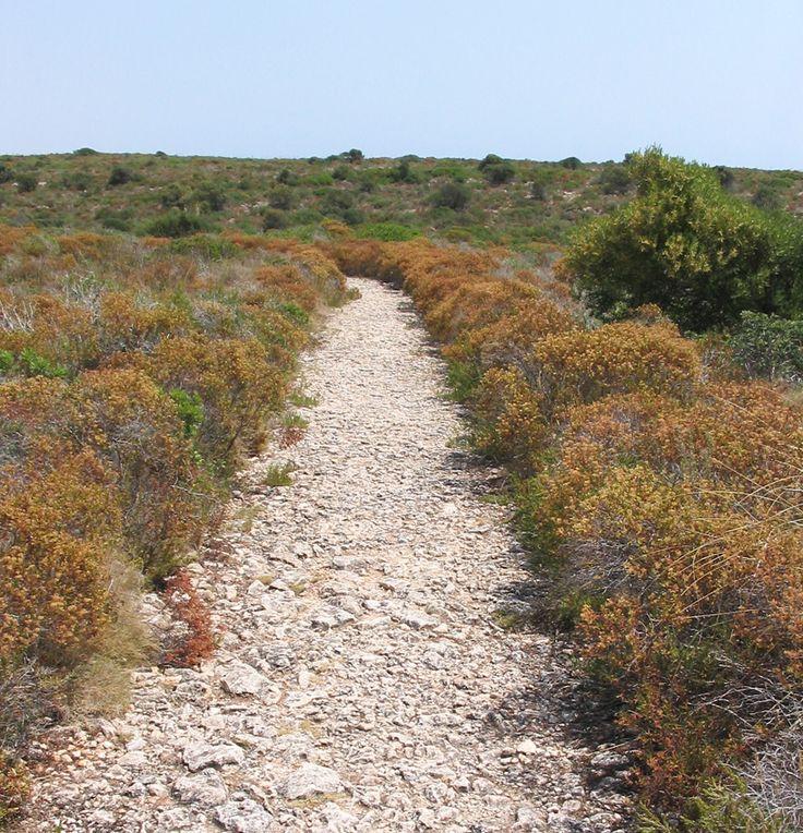 Routes through the fileds in Cales de Mallorca